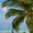tropical beach — Stock Photo #1636581
