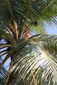 Tropical palm with bat — Stock Photo