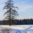 Stock Photo: Frosty forest landscape
