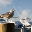 Royalty-Free Stock Photo: Seagull On Piling