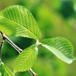 Green leaves background in sunny day - 
