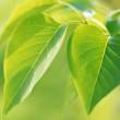 Green leaves background in sunny day — Stock Photo #1396714
