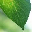 Green leaves background in sunny day — Stock Photo #1396741