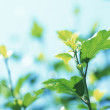 Green leaves background in sunny day — Stock Photo