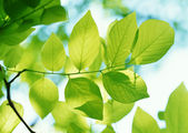 Green leaves background in sunny day — Foto Stock