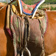 Saddle on horse — Stock Photo