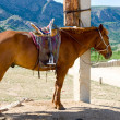 Saddled horse at tethering post - Stock Photo