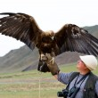 Golden Eagle with spread wings - Stock Photo