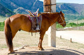 Saddled horse at tethering post — Zdjęcie stockowe