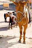 Sad horse at tethering post — Stock Photo
