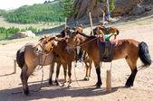 Horses at tethering post — Stock Photo