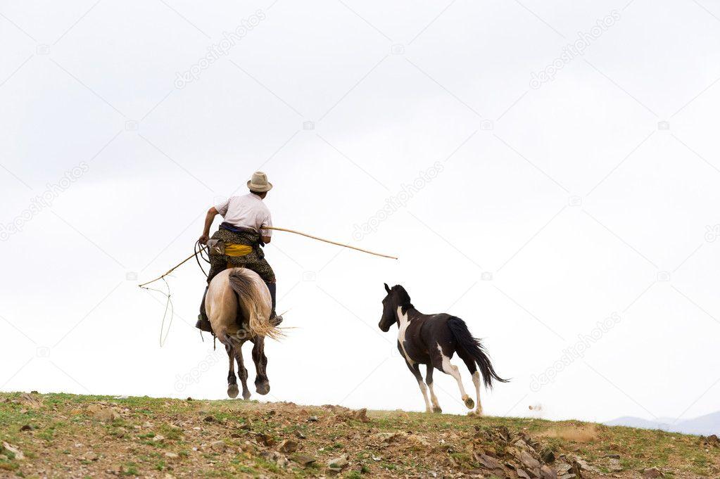 купить лассо для ловли лошадей в москве