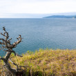 Solitary dried little tree at lake shore — Stock Photo #1405089