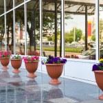 Flowerpots — Stock Photo #1408083