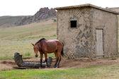 Sad horse at a lodge — Stock Photo