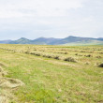 Луг с косили траву — Стоковое фото #2124711