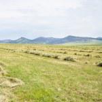刈られた草の牧草地 — ストック写真