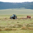 Hay harvesting — Stock Photo