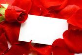 Rose et message sur un pétales. fond — Photo