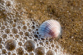 Shell covered by wave with bubbles — Stock Photo