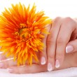 Beautiful french manicure and flower — Stock Photo