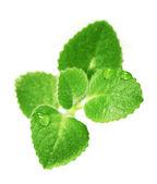 Small green plant — Stock Photo