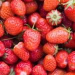 Fresh strawberry — Stock Photo #1454960