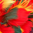 Colorful parrot feather background — Stock Photo