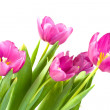 Bunch of beautiful spring flowers — Stock Photo #1464393