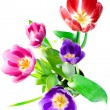 Bunch of beautiful spring flowers — Stock Photo #1464400