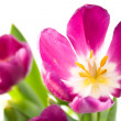 Bunch of beautiful spring flowers — Stock Photo #1464402