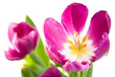 Bunch of beautiful spring flowers — Stock Photo