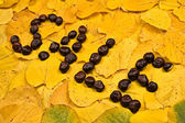 Word from chestnut on leaf — Stock Photo