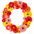 Beautiful alphabet of flowers - Stock Photo