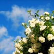 Stock Photo: Rose flowers on background blue sky