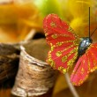 Red butterfly — Stock Photo #1770724