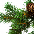 Branch of Christmas tree on white — Stock Photo #1406444