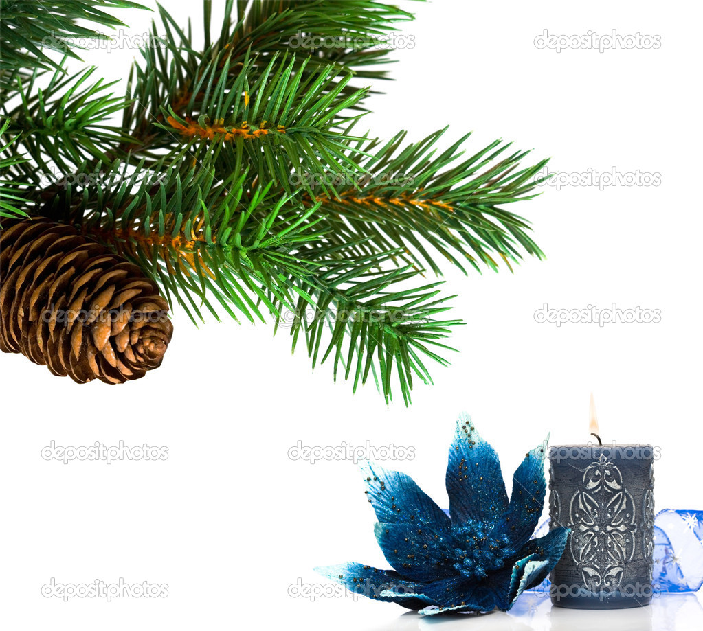Branch of Christmas tree on white — Stock Photo #1406549