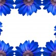 Frame of blue flowers isolated — Stock Photo