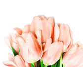 Tulipani isolati su sfondo bianco — Foto Stock