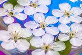 Printemps des fleurs de sakura dans l'eau — Photo