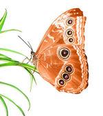 Hermosa mariposa en una hoja verde — Foto de Stock