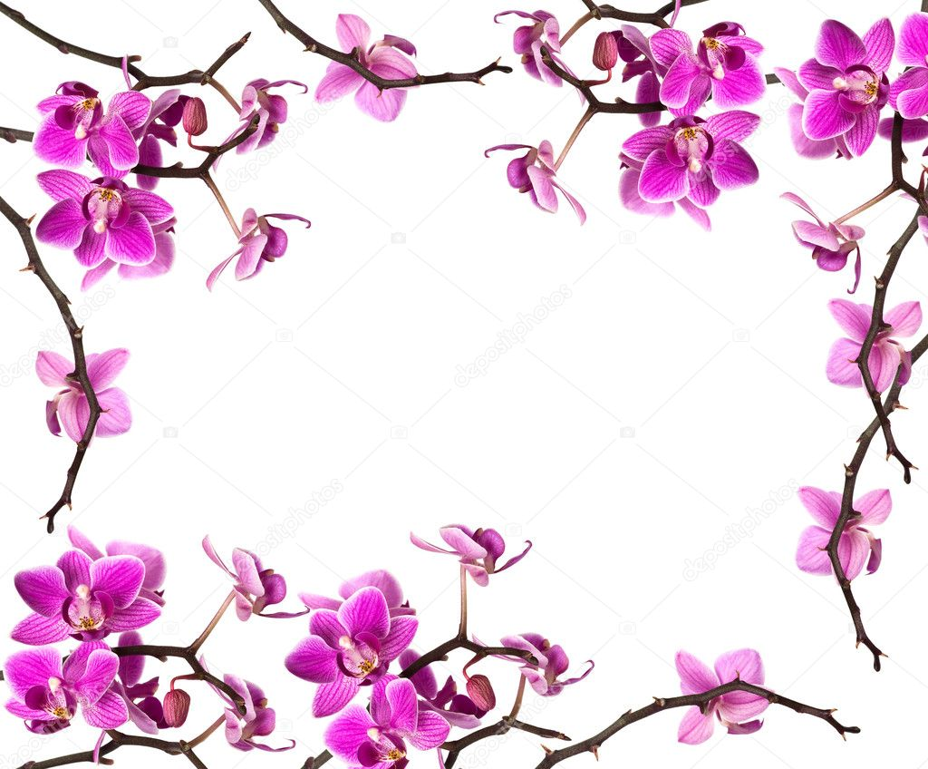Orchid isolated on white background  — Stock Photo #1414885