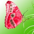 Stock Photo: Beautiful butterfly on green leaf