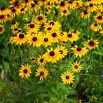 Beautiful yellow flower on field — Stock Photo #1420799