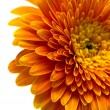 Stock Photo: Orange flower isolated