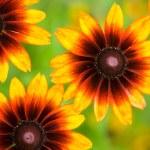 Beautiful yellow flower on field — Stock Photo