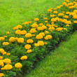 Orange flowers on green field — ストック写真