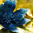 Blue flower poinsettia - Stock Photo