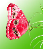 Beautiful butterfly on a green leaf — Fotografia Stock